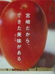 宮崎産 完熟宮崎マンゴー 大玉5Lサイズ(650g以上 1玉 化粧箱入り【贈答品】【5月16日〜5月26日発送日付指定不可】