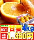 【3月中旬頃からの商品発送】送料無料!甘酸っぱい味わいが最高...