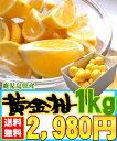 [黄金柑1kg]鹿児島県産のレモンのように黄色いのに結構甘い希少な柑橘です【全国送料無料】【3月下旬からの発送】