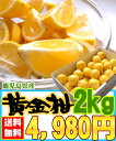 [黄金柑2kg]鹿児島県産のレモンのように黄色いのに結構甘い希少な柑橘です【全国送料無料】【3月下旬からの発送】