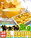 [黄金柑3kg]鹿児島県産のレモンのように黄色いのに結構甘い希少な柑橘です【全国送料無料】【3月下旬からの発送】