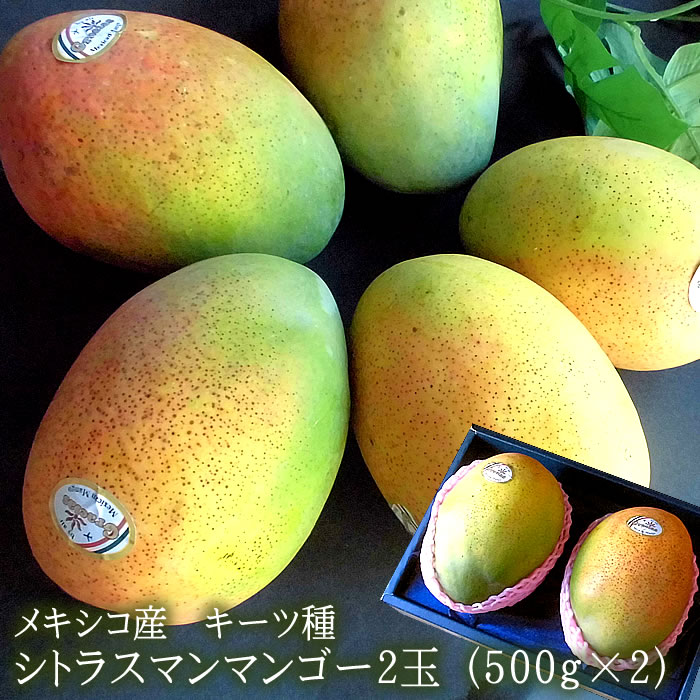メキシコ産マンゴー 希少品種 キーツマンゴー [シトラスマンゴー2玉] 500g×2 送料無料画像