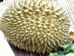 【全国送料無料!】熱帯果実の頂点に君臨する魔性の果実と言えば[タイ産ドリアン1個]カスタード...