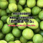 無農薬・化学肥料不使用(有機 国産ライム 1kg)サイズ込 約50g〜100g/玉 希少 限定数 防腐剤・ワックス・防ばい剤不使用 オーガニック 日本全国送料無料 限定 青果