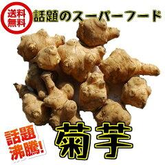【送料無料】(菊芋 約9.5kgケース) サイズ込 イヌリン きくいも 生 キクイモ