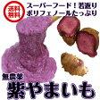 【送料無料】業務用(紫やまいも 5kg) サイズ込  土付き生やま芋 やま芋