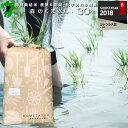 特別栽培米 30年産 熊本県産 森のくまさん 30kg 小分...