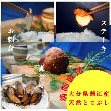 【送料無料】蒲江産の天然とこぶし!!美味な天然トコブシをご家庭で!トコブシ約700g(15個程度)【サイズ混合】