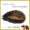 【生きたままお届け】送料無料!天然トコブシを生きたままお届けします!!漁師直送活きとこぶし【内容量:約1キロ】(サイズ混合)