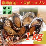 【アワビならぬ天然トコブシ】漁師直送の天然トコブシ!!天然とこぶし約1キロ(サイズ混合)送料別☆アワビもいいけどトコブシも☆
