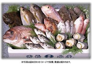 カード・銀行・郵便振替のみのお取り扱いです産地直送! 四国/宇和島 6700円旬の鮮魚BOX【冷蔵品】