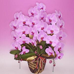 女性への贈り物、華やかな場所に負けないピンク