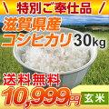 【送料無料】滋賀県産コシヒカリ玄米30kg(限定品)【こしひかり】
