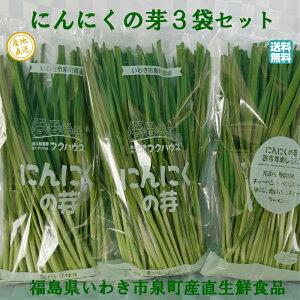 にんにくの芽1