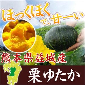 九州熊本益城で育てた、こだわりのホクホク甘い、濃厚なかぼちゃです。かぼちゃ 栗豊 5〜6個...
