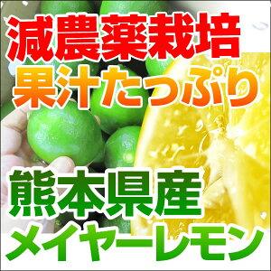 国産レモン(メイヤー)ノーワックス! 九州熊本三角町有機肥料を使用 A級品5kg収穫は9月下旬からです週2〜3日ですので期日指定はできません