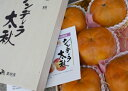 熊本産シンデレラ太秋柿 最高級品 木箱5個入り約2k10月中旬頃より収穫予定です