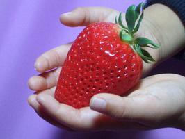 いちご プレミアムな大粒&プレミアムな甘さと香りひょうたんいちごみやび 特大サイズ9粒【いち...