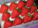いちご 笑顔になる♪甘さと香りひょうたんいちごみやび大粒サイズ12粒【いちご】【送料無料】【...
