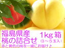 赤と黄色の桃を見事にコラボしちゃいました♪夢の桃詰合せセット【送料無料】桃の詰合せ1kg箱(3〜5玉入)♪黄金桃と特秀品の伊達市産桃を一緒にしてお届け♪お客様の声から誕生した極上桃のコラボレーションです。【発送は8月下旬頃から発送予定】【お試しセット】【楽ギフ_のし】【がんばろう!福島】10P13Feb12