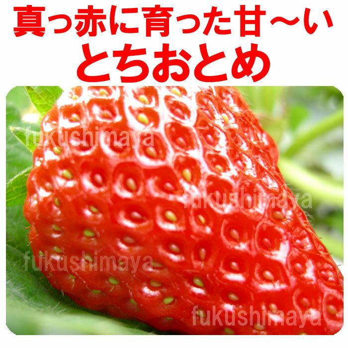 とちおとめ いちご (2パック入2L〜3L) 栽培方法にこだわった甘いイチゴ 【発送時期:2月中旬頃〜3月下旬頃まで発送予定】