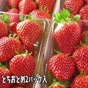 とちおとめ いちご (2パック入2L〜3L) 栽培方法にこだわった甘いイチゴ 【発送時期:2月中旬頃 ...