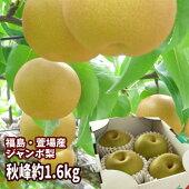 【ジャンボな秀峰梨】福島県かやばの梨(約1.6kg箱3〜4玉入)。1玉450g以上の大きな梨。