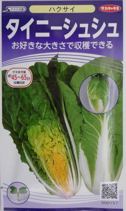 【サカタのタネ】タイニーシュシュ白菜 小袋