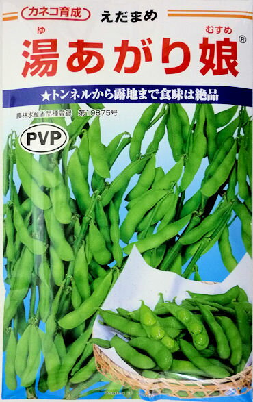 【カネコ種苗】湯あがり娘枝豆 200粒