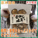 まるさん指定農法で生産された干し椎茸です。ほししいたけ 干し椎茸 干ししいたけまるさん む...