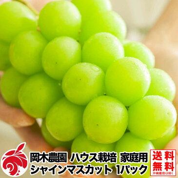 ご予約受付中 家庭用 ぶどう シャインマスカット 1パック 岡木農園 ハウス栽培 種無し 皮ごと 1パックおよそ350gから400g 送料無料 産地直送 ブドウ 葡萄