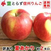 ご予約受付中訳あり夏あかり約2キロおよそ5〜8玉希少品種信州りんご等級C2kg送料無料数量限定