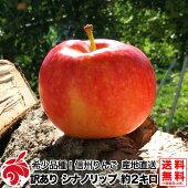 ご予約受付中家庭用シナノリップ2キロ5〜8玉希少品種信州りんご等級B3kg送料無料数量限定