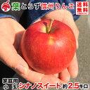 10月中旬より 家庭用小玉 信州りんご シナノスイート 約2.5キロ 12〜16玉 等級D 3kg 減農薬 葉とらず 長野県産 産地直送 送料無料 ご自宅用
