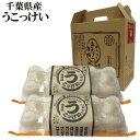 うこっけいの卵20個入 千葉県産 鶏卵 卵 うこっけい たまご お取寄せ 生 お土産