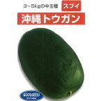 瓜(小〜中玉向き品種) 種 【沖縄冬瓜 1DL】