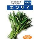 葉野菜 種 【つるなしエンサイ 小袋】
