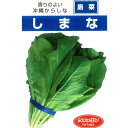 葉野菜 種 【沖縄からし菜 しまな 小袋】【香りの良い沖縄からし菜】