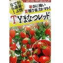 トマト(ミニトマト) 種 【TYまなつレッド100粒】