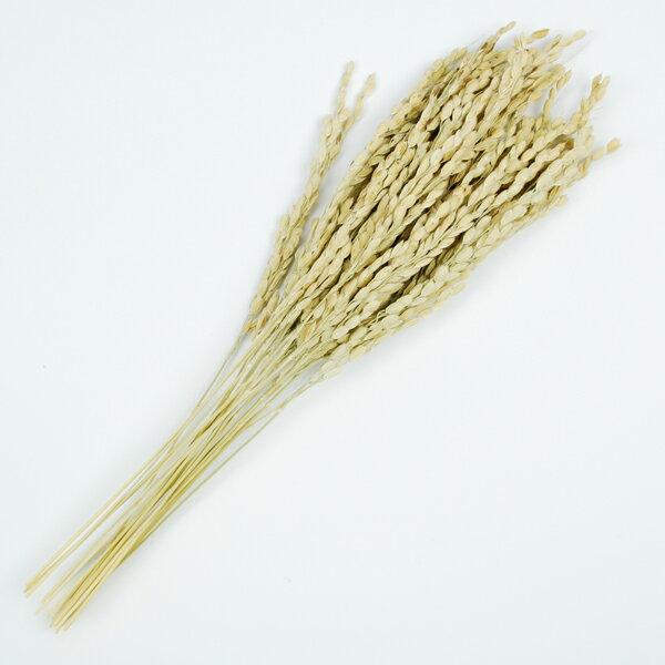【しめ縄材料】稲穂(いなほ) 秋の装飾【領収書発行】