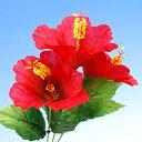 Hibiscus-r