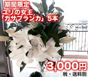 ゆり 『カサブランカ』5本 生花/切花/花束【gift_d18】