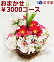 おまかせ3000円コース(写真はイメージです)即日発送可【あす楽対応_関東】【あす楽対応_甲信越】【