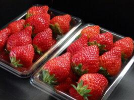 栃木県宇都宮市須永いちご農園とちおとめ300g×2パック親は「久留米49号」と「栃の峰」