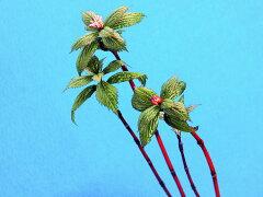 一人静[紅土筆(べにつくし)]赤花.多節間.多葉性休眠.中2~3芽苗・珍品・山野草