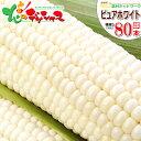 【予約】北海道 とうもろこし 白い ピュアホワイト 80本入