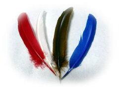 獣の香りとリアルな大羽根♪限定【カラーコンドルの羽根2本組】【メール便OK】
