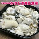 北海道厚岸産牡蠣むき身 500g水無しパック