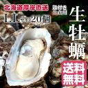 【マルえもん LLサイズ20個】北海道厚岸産本養殖牡蠣生食用