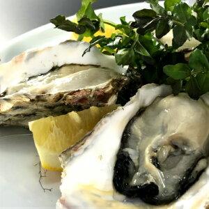 【マルえもんLサイズ50個】厚岸産本養殖牡蠣生食用